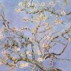 Van Gogh rami di mandorlo in fiore 769